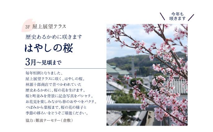 はやしの桜