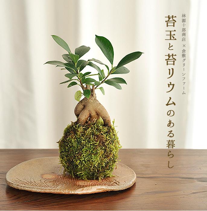 林源十郎商店×倉敷グリーンファーム 苔玉と苔リウムのある暮らし